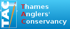 Thames Anglers' Conservancy